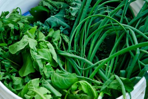 Food Focus: Leafy Greens